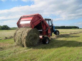 Аграриями района продолжается заготовка грубых и сочных кормов для животноводства.