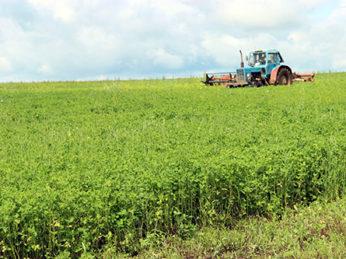 Для местных аграриев последняя декада июля выдалась неблагоприятной для заготовки кормов. Дожди, обильно пролившиеся на поля, затруднили работы. Сейчас с наступлением солнечной погоды механизаторы наверстывают упущенное время и активно ведут силосование и заготовку сена.
